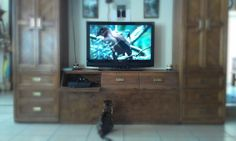 Luci the cat watching birds on tv.