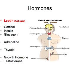 """Leptin is produced in the fat cell & acts like the body's fuel gauge communicating to the brain how much fuel (fat) is in its tank. Rising leptin levels shut off hunger & stimulate metabolism. Falling leptin levels induce appetite & slow metabolism. ...  To positively influence this hormone don't chronically over or under-eat food. Eating slowly helps to support appropriate levels of leptin.  ...  Check out the App """"Eat Slower"""" to help regulate both Ghrelin and Leptin. ...  Click to read…"""
