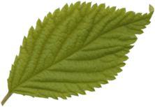 ladylony — «leaf.png» на Яндекс.Фотках