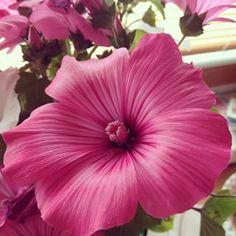Lucia Adamcová @missluciadams Instagram photos   Websta (Webstagram) Instagram Images, Photo And Video, Lifestyle, Videos, Plants, Photos, Pictures, Plant, Planets