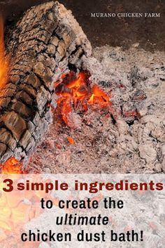 Just 3 simple ingredients to create the ultimate dust bath for chickens. Rid poultry of parasites wi Chicken Garden, Chicken Life, Backyard Chicken Coops, Chicken Coop Plans, Building A Chicken Coop, Chicken Runs, Chicken Tractors, Chicken Coup, Chicken Houses