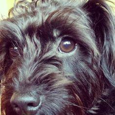 Innocent eyes  #puppy#mine#adorable :)
