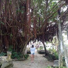 Camotes Island Cebu, Plants, Plant, Planets
