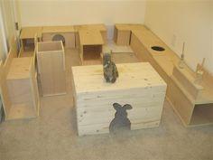 _bunspace_bunny_rabbit.JPG
