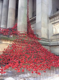 The Weeping Window, St George's Hall Liverpool. Sculpture made up of several thousand ceramic poppies. show how mass and gradient can show a creative effect. St George's Hall Liverpool, Liverpool England, Ceramic Poppies, St Georges Hall, Flower Installation, Remembrance Day, Thinking Day, Stage Design, Public Art