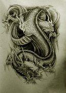 Oriental dragons