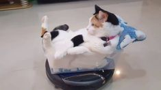 A Disconcerted Cat Goes for a Spin Around the Room in a Plastic Shoebox Atop a Roomba Vacuum