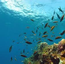 Afbeeldingsresultaat voor Buceo isla tabarca alicante