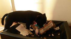 Zeke - DoggieBag.no #DoggieBag #Hund Paper Shopping Bag, Bags, Home Decor, Pet Dogs, Handbags, Homemade Home Decor, Dime Bags, Lv Bags, Purses