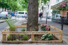 Pied d'arbre végétalisé, boulevard de Charonne, Paris 20e.