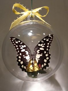 """Papilio demodocus""  from Argentina      Clear ornament 80 mm $15.00 US Butterfly Ornaments, Clear Ornaments, Christmas Bulbs, Holiday Decor, Crafts, Argentina, Manualidades, Christmas Light Bulbs, Handmade Crafts"