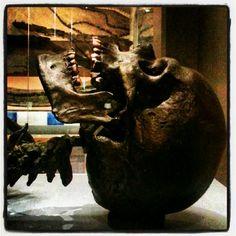 Scarborough Rotunda Museum. Museum, Vase, Decor, Decoration, Vases, Decorating, Museums, Deco, Jars