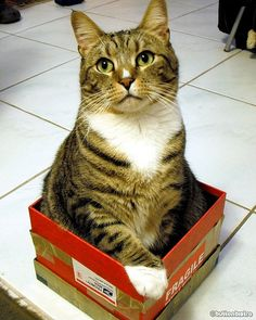 Cat & Box by button bistro, via Flickr
