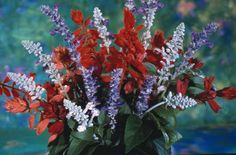 Patriotic Salvia