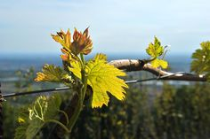 Cavril Agriturismo, Lombardy, Italy. We are organic wine makers http://www.organicholidays.com/at/3240.htm