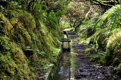 Levada do Faial, Faial Island, Azores, Portugal  Travel to Azores Islands in Portugal to enjoy azores beautiful nature.  --  Have a look at http://www.travelerguides.net