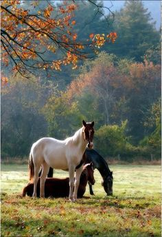 'Beautiful misty morning with dew covered ground and horses grazing, what a place to be'