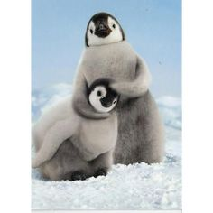 Our Emperor Penguin Chicks Birthday card makes for a cool and cuddly way to say Happy Birthday. The inside of this 4 x 6 card readsFeel the love! Cute Baby Animals, Animals And Pets, Funny Animals, Penguin Animals, Funniest Animals, Wild Animals, Beautiful Creatures, Animals Beautiful, Animal Pictures