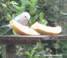 Alimente os pássaros  Fornecendo alimento adequado diretamente nos galhos dasárvores. Nozes e gordura são uteis no inverno. Não dê alime...