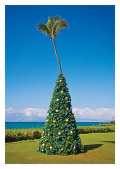 Every year PDN receives a variety of holiday cards from many photographers. Susan Seubert's card this year featured an amusing photograph a palm tree that Tropical Christmas, Beach Christmas, Christmas Trees, Boxed Christmas Cards, Holiday Cards, Holiday Decor, 10 Envelope, Happy Holidays, Palm