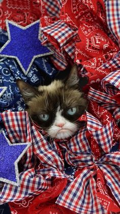 8 Super Tips to Make Your Grumpy Cat Happy! Funny Grumpy Cat Memes, Funny Cats, Grumpy Kitty, Cats Tumblr, What Cat, Cat Carrier, Cat Life, Cat Art, Cats And Kittens