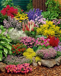 Colourful rockery