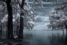 """Inside - Infrared Tree Landscape"" by mike irwin, Dallas // An infrared exposure done on Lake Lewisville in Texas.  Sky, clouds, trees, water and reflections. // Imagekind.com -- Buy stunning, museum-quality fine art prints, framed prints, and canvas prints directly from independent working artists and photographers."