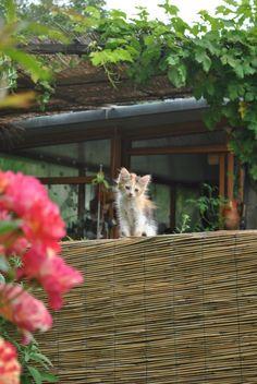 Gli abitanti del b Filosofia della Quotidianità a Calice Ligure #dogfriendly #dogtrip Cats, Daily Journal, Gatos, Kitty, Cat