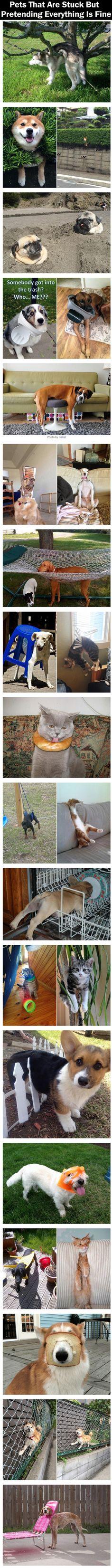 Poor pets!