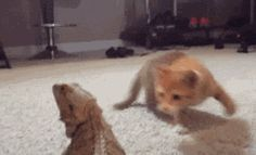 Kitten freaked out by lizard… A collection of CLICK ON THE PICTURE (gif) AN WATCH IT COME TO LIFE. ...♡♥♡♥Love it