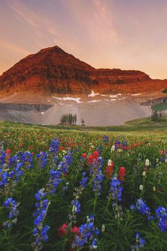 "eclypxe: "" wnderlst: "" Mt. Timpanogos, Utah | Emily Dickey "" Viu """
