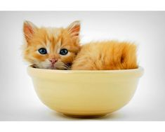 {kitten in a bowl} I want a shelf full of these, please!
