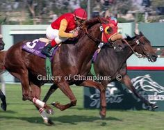 Chief Bearhart winning the 1997 Breeders' Cup Turf.  Chief Bearhart, a chestnut, was a son of Chief's Crown and a grandson of Six Crowns, daughter of Secretariat.  Chief Bearhart won the 1996 Breeders' Stakes (the only leg run on turf of the Canadian Triple Crown), 1997 Elkhorn Stakes, King Edward Breeders' Cup Stakes, Canadian International Stakes, Sky Classic Stakes, Breeders' Cup Turf, 1998 Niagara Breeders' Cup Turf Handicap, Sky Classic Stakes,(2nd time), and Manhattan Handicap.