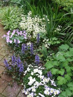Bottom to top: columbine foliage, viola 'Etain', Bugleweed (Auga 'Black Scallop) viola spp. Privacy Landscaping, Garden Landscaping, Exotic Plants, Green Plants, Green Garden, Shade Garden, Back Gardens, Flower Beds, Garden Planning