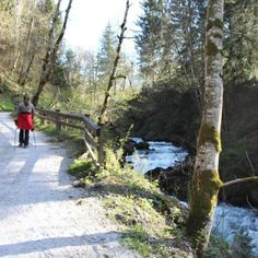 Spaziergang durch die Talbachklamm #schladming #planai #dachstein Wilde, Plants, Hiking Trails, Road Trip Destinations, Pipes, Water, Viajes, Plant, Planets