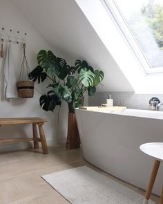Bathrooms are that which we do at Plumbstore. A shared non-ensuite bathroom is one which may be used by the students from a few bedrooms. With the majority of ensuite bathrooms being smaller than the most important bathroom we'll help… Continue Reading → Ensuite Bathrooms, Bathroom Windows, Bathroom Plants, Chic Bathrooms, Small Bathroom, Bathroom Ideas, Natural Bathroom, Modern Bathroom, Bad Inspiration