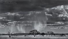 """Kalahari Rainscape"""" Kgalagadi Transfrontier Park, Kalahari Desert, South Africa/Botswana"""