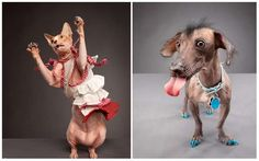 Carli Davidson's Dogs and Cats is Full of Quirky Personalities #cutepets #animalphotography