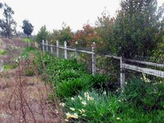 SPECIAL WIRE FENCES « Arbor Fence Inc   a Diamond Certified Company