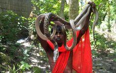 Gleich drei Schlangen jongliert dieser Inder beim Festival. Das Geschäft für...