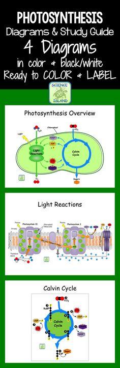 How to Study for Biochemistry | Albert.io