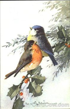 Divided Back Postcard Robin and Blue Bird on Sprig of Holly Birds Catherine Klein, Pretty Birds, Beautiful Birds, Watercolor Bird, Watercolor Paintings, Robin Bird, Two Birds, Illustration, Little Birds