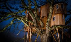 Image result for treehouses in england