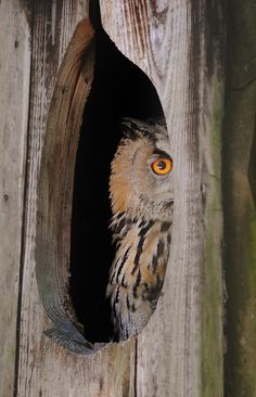 Will that owl eat my cat? Probably not. We get a lot of questions about that here at The Outdoor Campus. There are owls and hawks all over the place – in town and out of town – but we don't see the...