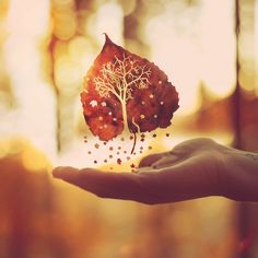 """Autumn is a second spring when every leaf is a flower."" by Boy_Wonder, via Flickr"
