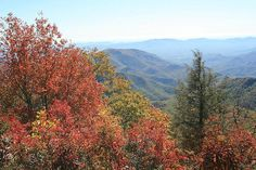 In shades of red and brown ... The Blue Ridge Parkway by tguttilla, via Flickr