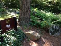 Fern Glade Garden Garvan Woodland Gardens