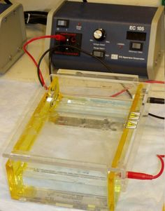 Gel electrophoresis apparatus – an agarose gel is placed in this buffer-filled box and an electrical field is applied via the power supply to the rear. The negative terminal is at the far end (black wire), so DNA migrates toward the cathode (red wire). Medical Laboratory Science, Forensic Science, Chemistry Experiments, Science Fair Projects, Ap Biology, Teaching Biology, Dna Technology, Technology Gadgets, First Year Teaching