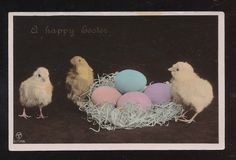 Cute Chicks with Nest & Eggs Vintage Antique Photo Easter Postcard-aaa988