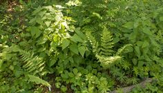forest plants - Google Search